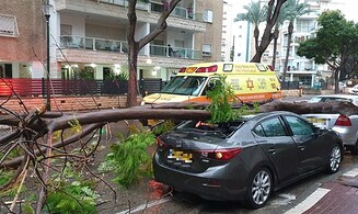 Elderly man returns from shopping, injured by falling tree