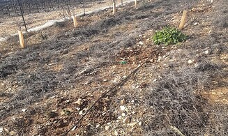 Agricultural warfare again hits Gush Etzion
